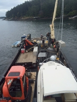 orcas setting anchors