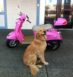 Bob admiring pink scooter.....